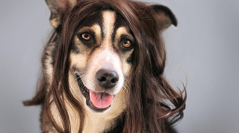Dog with fabulous hair